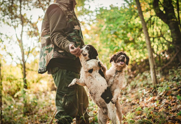 hunting dogs andrea cairone SW7UylxRpsg unsplash 730x504