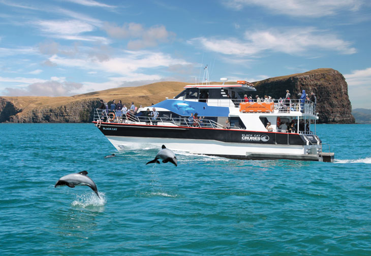 Akaroa harbour and wildlife cruise 730x504