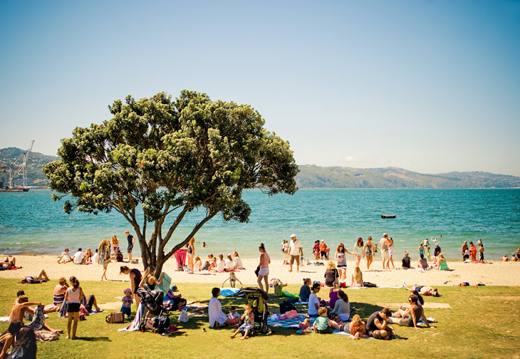 oriental bay beach shady tree 730x504