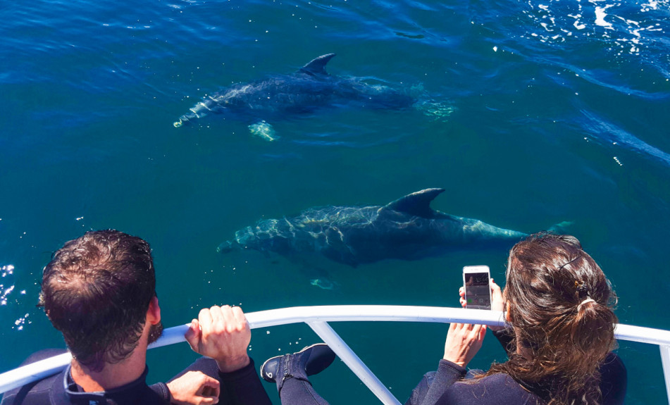 People close to Dolphins on E-ko Tour