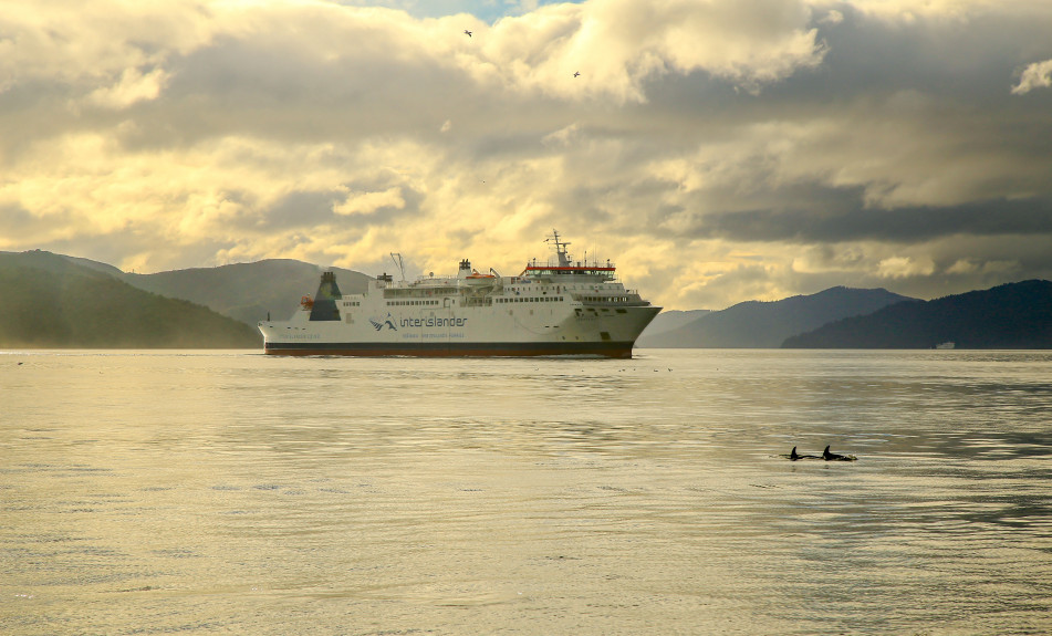Dolphins with Interislander in the Sounds