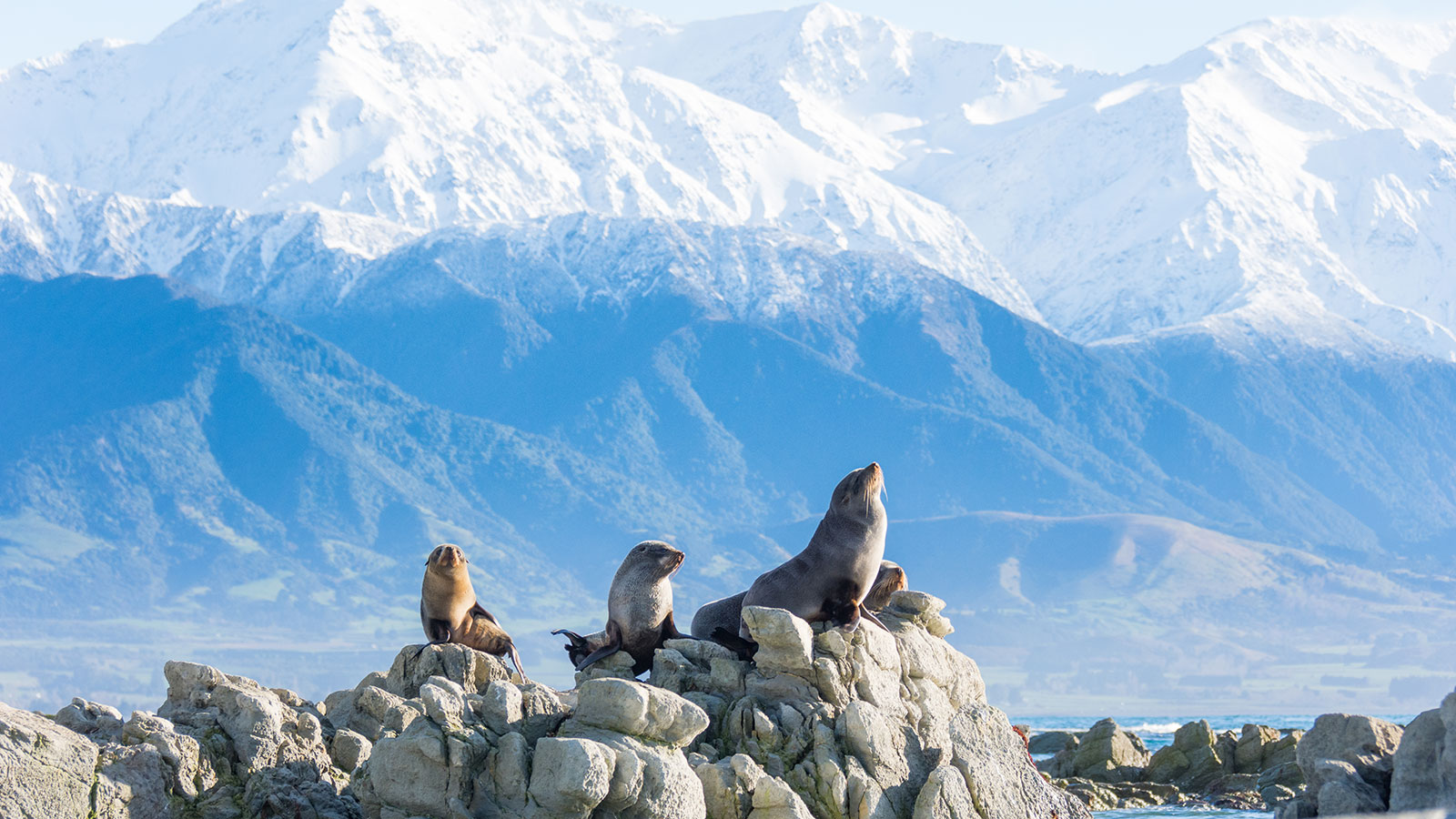 The Top Things You Must Do In Kaikoura | The Great Journeys of New ...