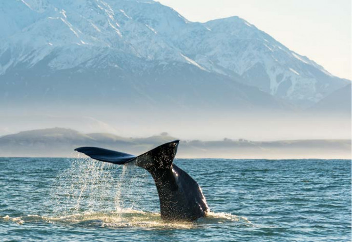 Whales Tale Mountain photo Bare Kiwi 730x504