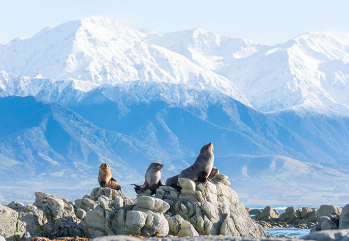 Anzacs things to do in Kaikoura snippet