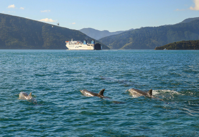 Kaiarahi Three dolphins in foreground SNippet