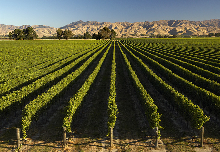 Marlborough Wineries Blog